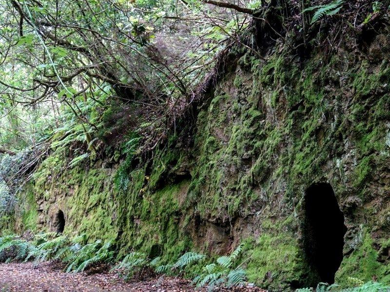 El Bosque Encantado de Anaga | Cuevas