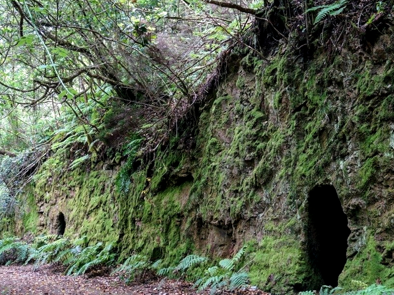 El Bosque Encantado de Anaga   Cuevas