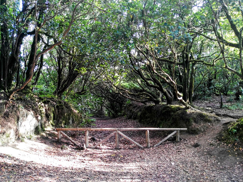 Zona de aparcamiento   El Bosque Encantado de Anaga   Tenerife