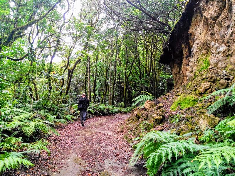 El Bosque Encantado de Anaga