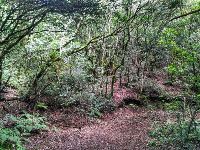 En el sendero | El Bosque Encantado de Anaga | Tenerife