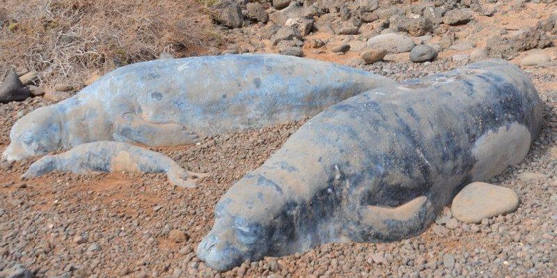 Isla de Lobos | Fuerteventura | Focas monje