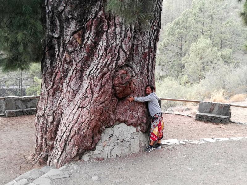 Vilaflor | Pino Gigante | Tenerife