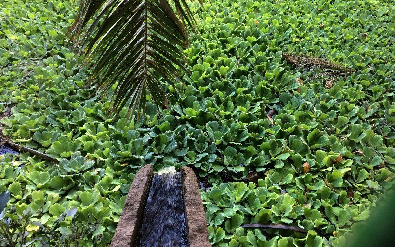 Naciente Madre del Agua | Tenerife