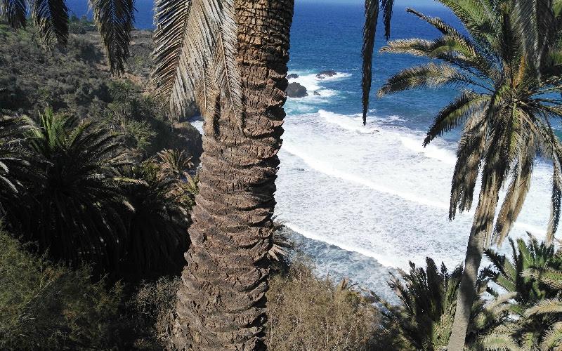 Rambla de Castro | Los Realejos | Tenerife Norte | Playa de Castro