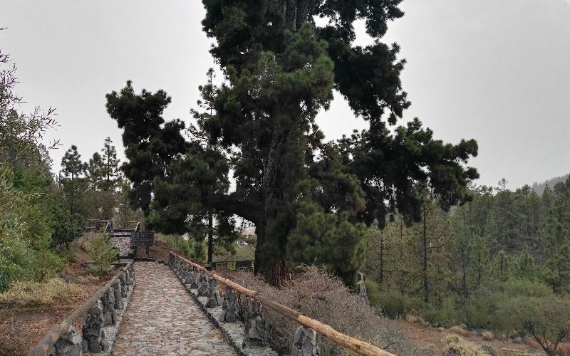Vilaflor | Pino Gordo | Camino de acceso
