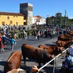 Fiestas de San Antonio Abad | Los Silos | Feria de Ganado
