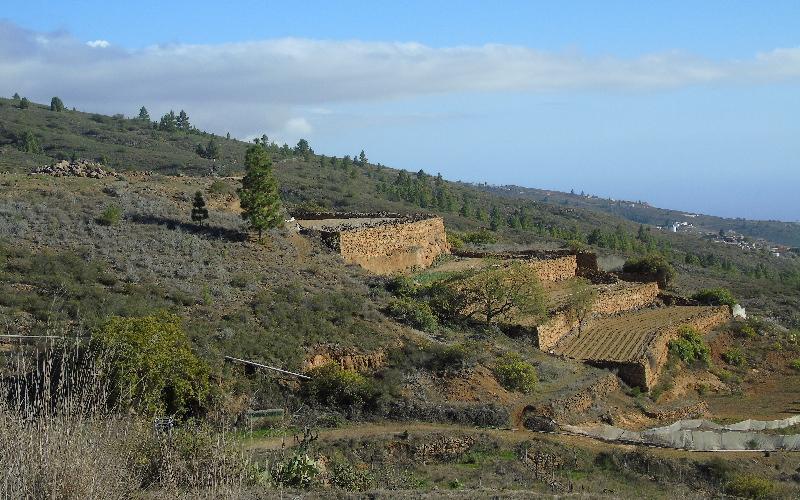 Caserío de Las Fuentes | Guía de Isora | Zonas de cultivo