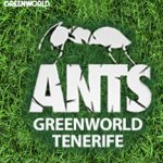 GreenWorld presents Ants | Tenerife | 2018
