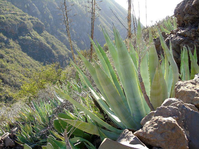 Caserío de Las Fuentes | Flora