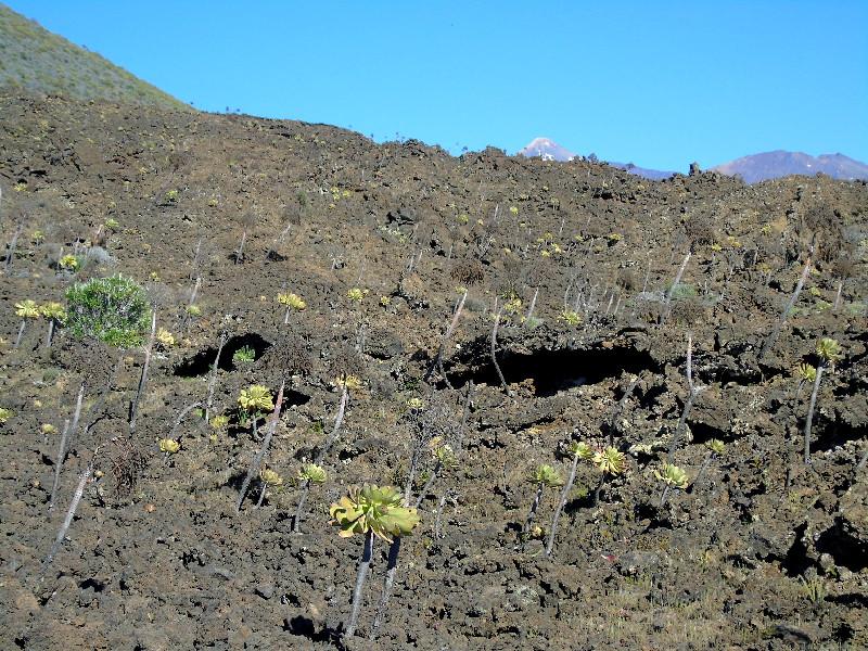 Ruta por la Montaña Bilma | Santiago del Teide | Malpaís