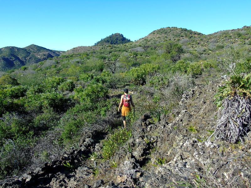 Ruta por la Montaña Bilma | Santiago del Teide | Más vegetación