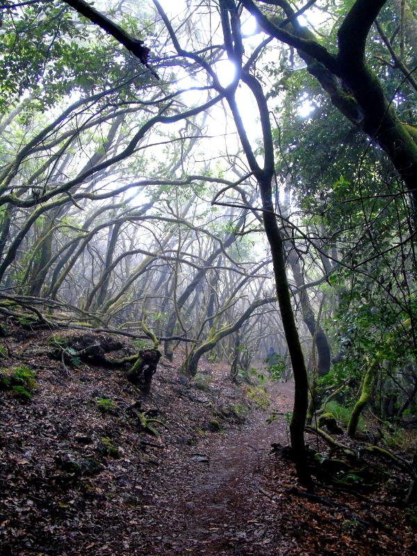 Guía de La Gomera | Parque Nacional del Garajonay | Laurisilva canaria