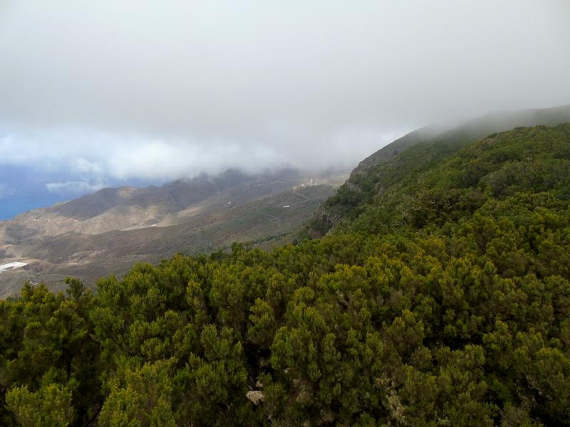 Guía de La Gomera | Parque Nacional del Garajonay | Mar de nubes