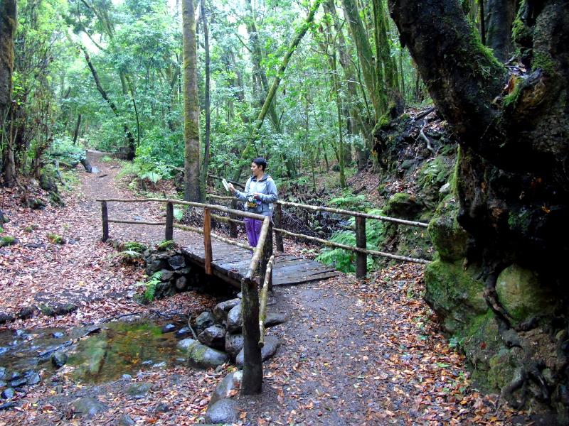 Guía de La Gomera | Parque Nacional del Garajonay | Puente
