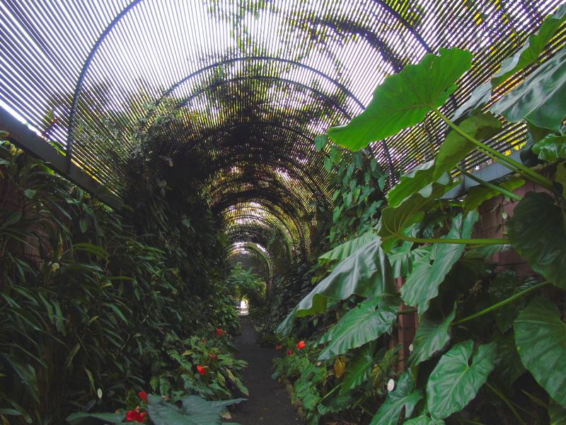El Jardín Botánico | Puerto de la Cruz | Tenerife | Islas Canarias