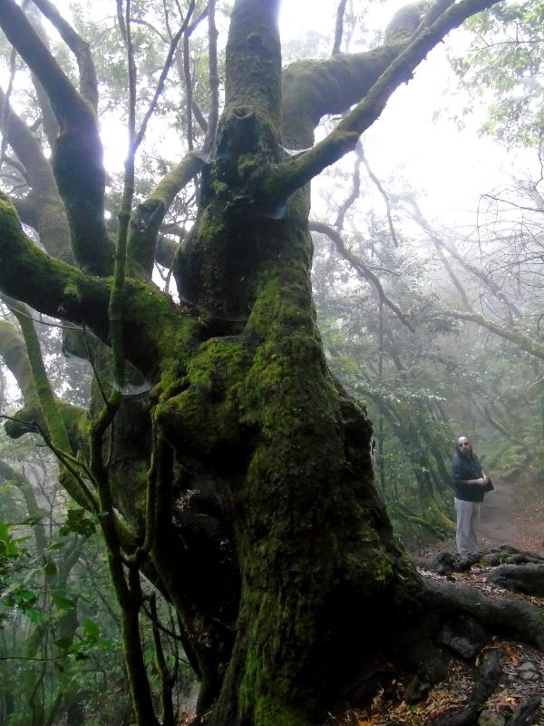 El Parque Nacional de Garajonay | La Gomera | Laurisilva