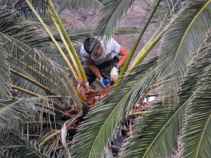 Guaraperos | Miel de palma | La Gomera