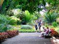 Jardín Botánico | Puerto de la Cruz | Tenerife | Estanque principal