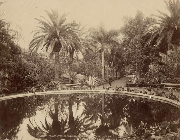 Jardín Botánico | Puerto de la Cruz | Tenerife | Islas Canarias | Imagen antigua