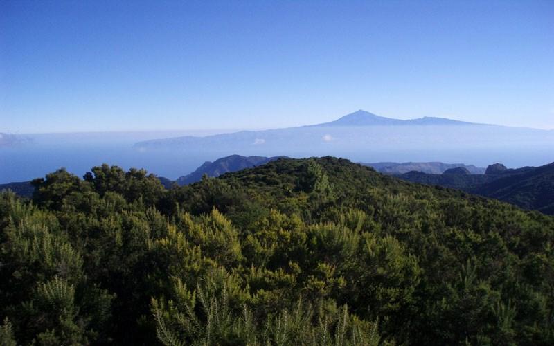 Parque Nacional de Garajonay | La Gomera | Alto de Garajonay
