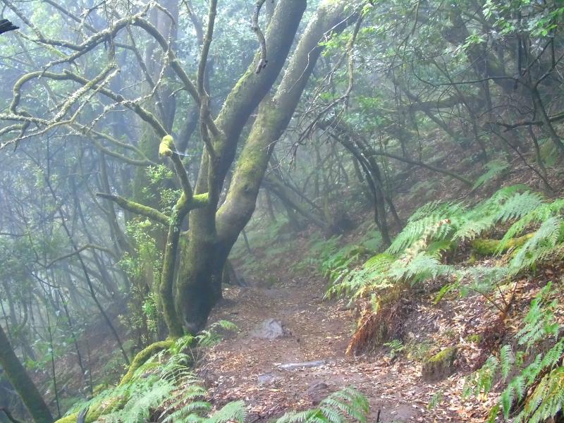 Parque Nacional de Garajonay | La Gomera | Laurisilva