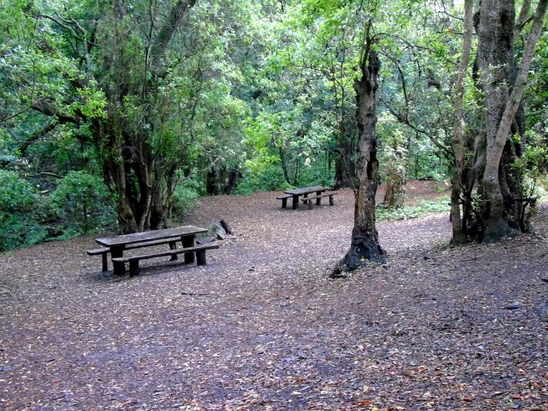 Parque Nacional de Garajonay | Senderismo | La Gomera | Área recreativa de la Ermita de Lourdes