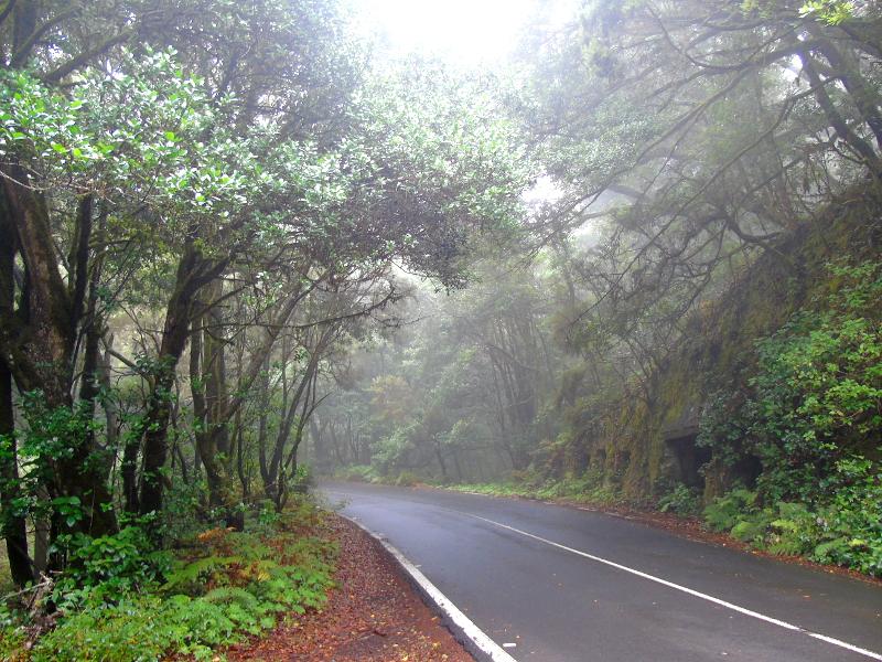 Parque Nacional de Garajonay | Senderismo | La Gomera | Carretera