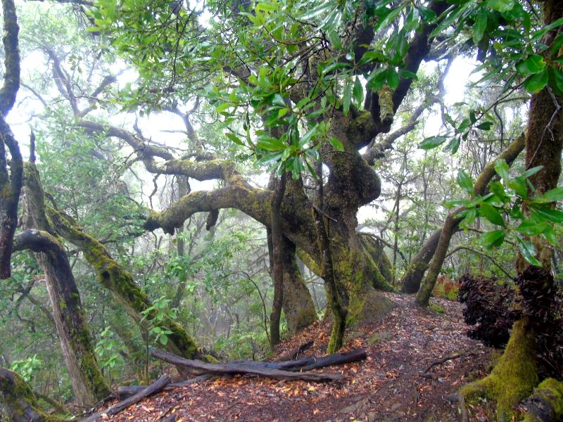 Parque Nacional de Garajonay | Senderismo | La Gomera | Bosque