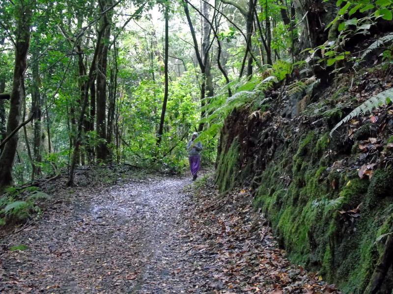 Parque Nacional de Garajonay | Senderismo | La Gomera | Sendero