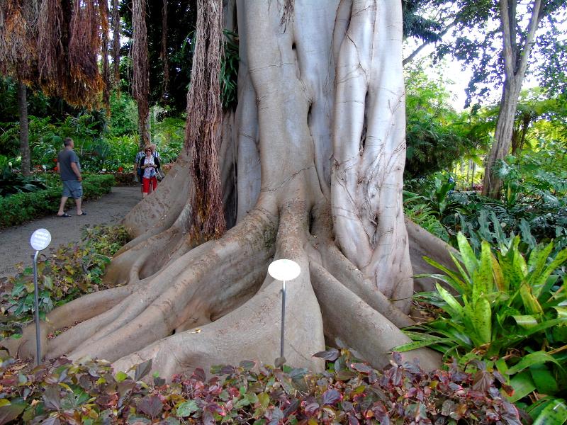 Puerto de la Cruz | Jardín Botánico | Tenerife