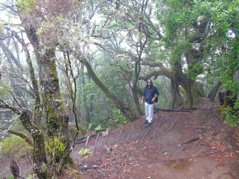 Senderismo | Parque Nacional de Garajonay | La Gomera | Laurisilva
