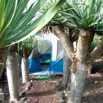 Camping Invernaderito | Tejina