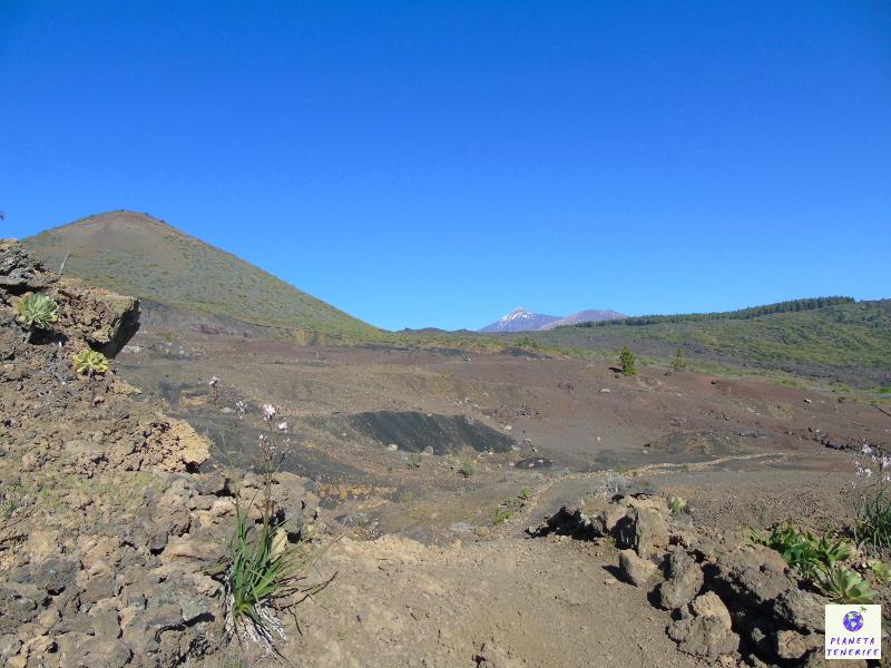 Ruta Almendros en Flor Tenerife