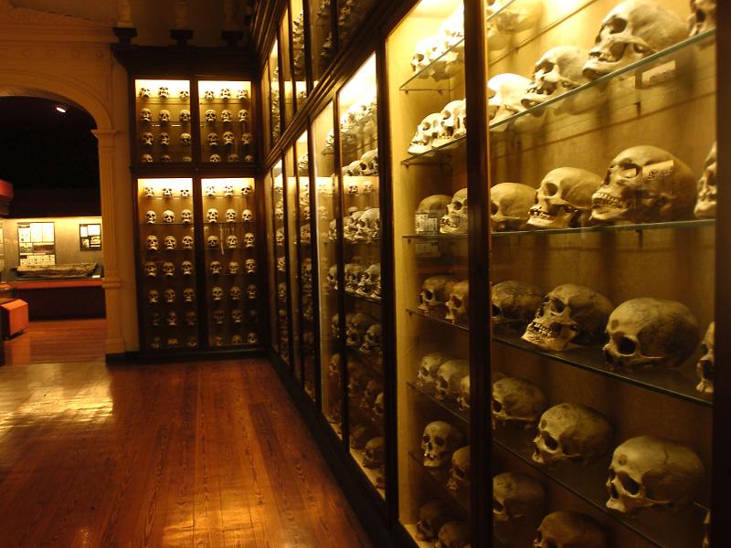 Museos Canarios con Visita Online